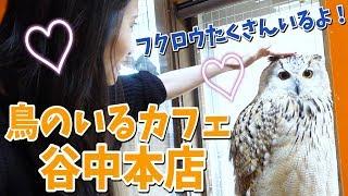 【 鳥カフェ 】 鳥のいるカフェ 谷中本店 フクロウ たくさんいた!【 きいたん 鳥チューバー 】