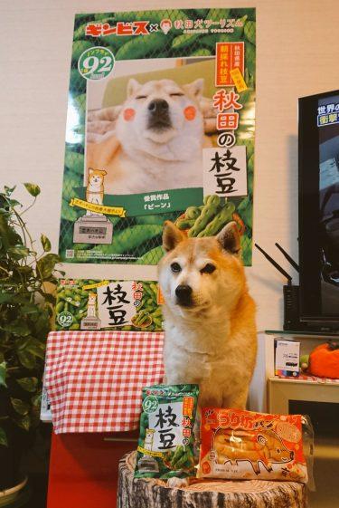 UAE🇦🇪現地でナンパした日本人美女と楽しそうに⚽観戦しているところが、バッチリ📺テレビ中継されていたビンパパ…気まずかったのか、有楽町の秋田県アンテナショップで、枝豆スナックを買ってきてくれた💣(笑)