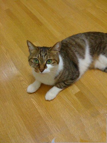 【山の音楽隊  替え歌】うちの猫みんなドMなんです。上手にお尻を叩いてみます。姫トントントン、小次バンバンバンももトントントン、タロバァチバァチバァチいかがです(⌒▽⌒)声に出して歌ってみてね(๑˃̵ᴗ˂̵)…