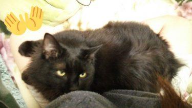うちの可愛い息子のトトを見て!!!?←うちの可愛いトトはよくみみたんのおっぱいを枕にしてよく寝てたなぁ…