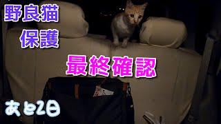 最後の乗車、その後おっぱい【野良猫の保護まであと2日】